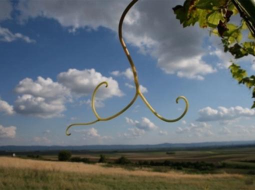 Oberhautzental Weinbau Strohmayer